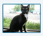 Suki, Roth & Miller Shop Kitty, 2006